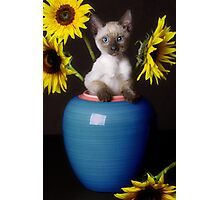Sunflower Scratch Photographic Print