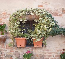 A Tuscan Window by Fara