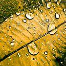 Tears... by Kornrawiee