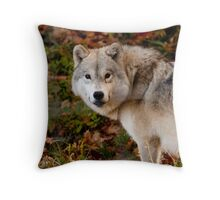 Arctic Wolf - Eye Contact Throw Pillow