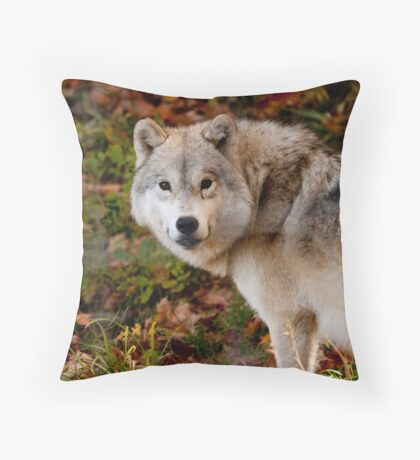 Arctic Wolf - Eye Contact Throw Pillow
