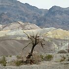 Dead Tree in Death Valley by Martha Sherman