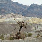 Dead Tree in Death Valley by Martha Sherman