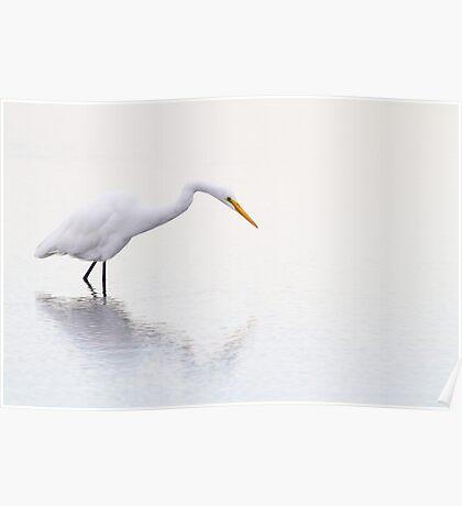 Stalking Egret Poster