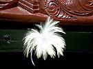 The white feather...... Maori waka ! by Roy  Massicks