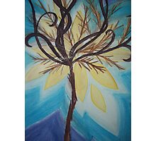 Feathery Tree Photographic Print