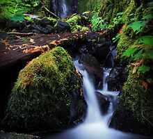 Pacific Crest Falls I by Tula Top