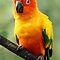 WILD BIRDS OF BRIGHT & VIVID COLORS!