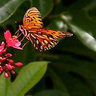 Butterfly and Flower by Sam Matzen