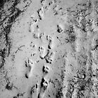 Footprints. by Alison Bur