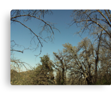 Sky And The Trees Canvas Print