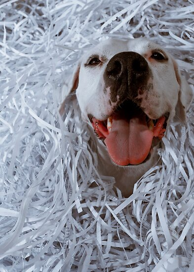 Dogs Love Paper by Jack Daniel Ciallella