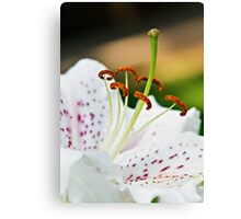 Lily Close Up Canvas Print