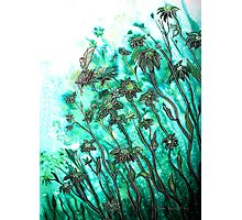 Fairy Flowers  Photographic Print
