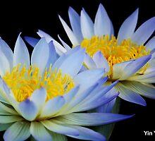 Yin Yang by jono johnson