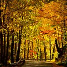 Fall Foliage by vasu