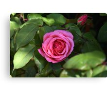 The garden Rose Canvas Print