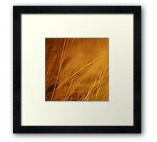 aurum Framed Print