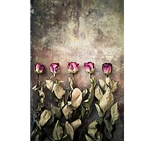 Five dried roses Photographic Print