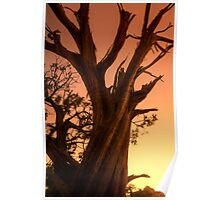 Sunset Bark Poster