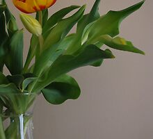 A tulip lounging in Style by Lozzar Flowers & Art