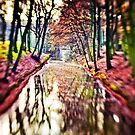 Colors of the season by Photonook