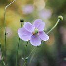 Anemones by Lynn Starner