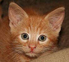 Kitten Douglas by Jo Nijenhuis