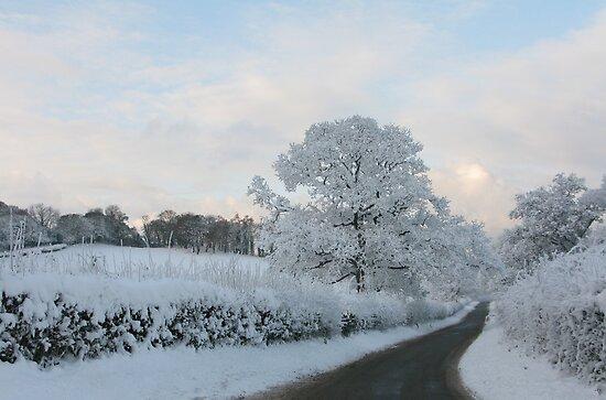 Road in winter/Ffordd yn y Gaeaf by blodauhyfryd