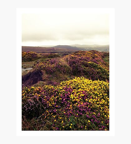 Dartmoor Heath Photographic Print