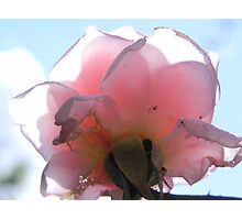 Cecile Bruner from below Photographic Print
