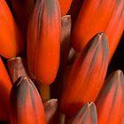 Red Cactus by SusanAdey