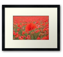 Poppy in poppy field Framed Print