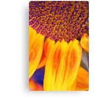 Sunflower III Canvas Print