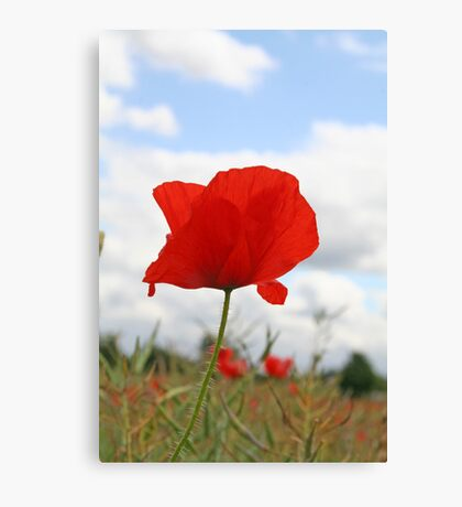 Single Poppy against blue sky Canvas Print