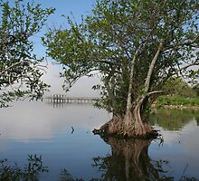 Morning in the glades by apein2film
