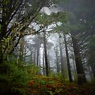 Trees and Fog by Charles &amp; Patricia   Harkins ~ Picture Oregon