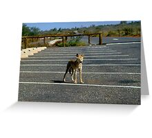 Young Dingo at Ayers Greeting Card