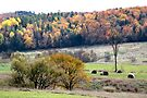 Fall in Gatineau Park - Gatineau Quebec by Debbie Pinard