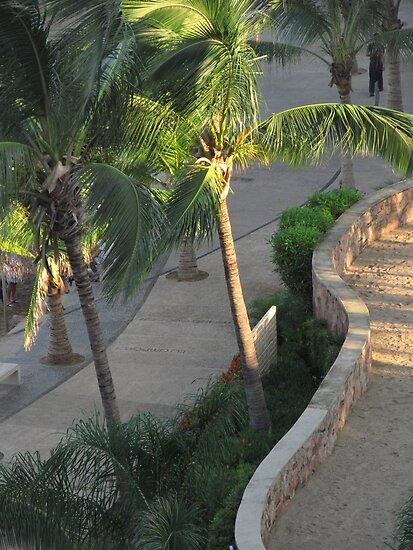 Palms in the first rays of the morning sun in Puerto Vallarta by PtoVallartaMex