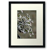 Christmas Holly Framed Print