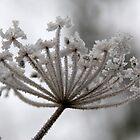 Frozen seed head. by sandyprints
