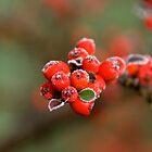 Frozen Berries. by sandyprints
