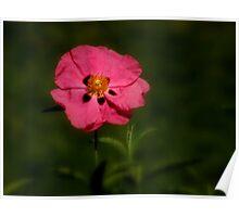 Botanical Simplicity ~ Part Three Poster