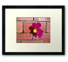 Maroon Flower Macro Framed Print