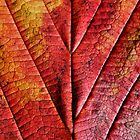 Autumn Abstract by SexyEyes69