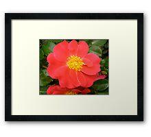 Governor General's rose 7 Framed Print