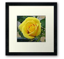 Serene Rose Framed Print