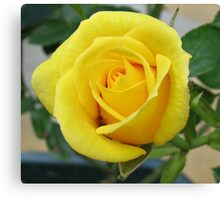 Serene Rose Canvas Print