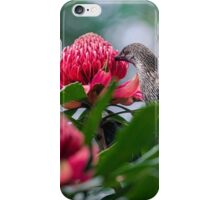 Wattlebird on Waratah iPhone Case/Skin